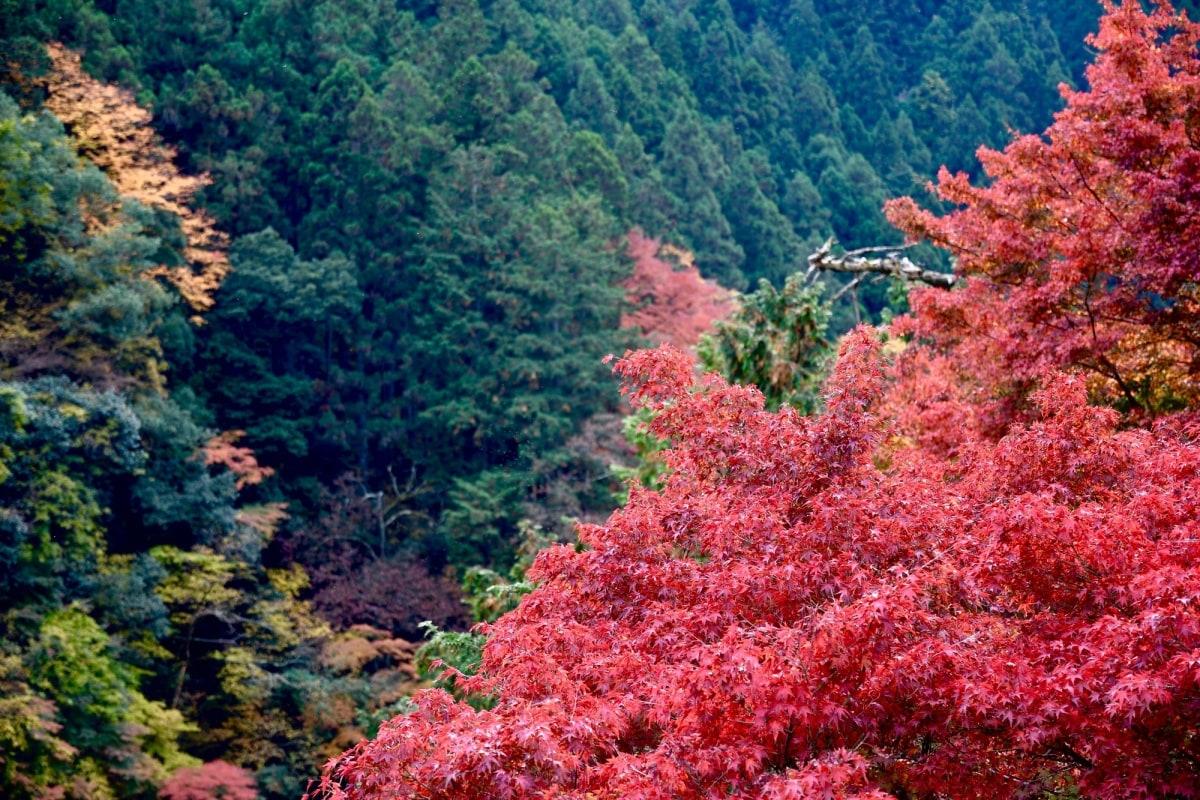 1. หุบเขาฮาโตโนสุ เมืองโอคุทามะ, โตเกียว (Hatonosu Vally Okutama-Machi, Tokyo)