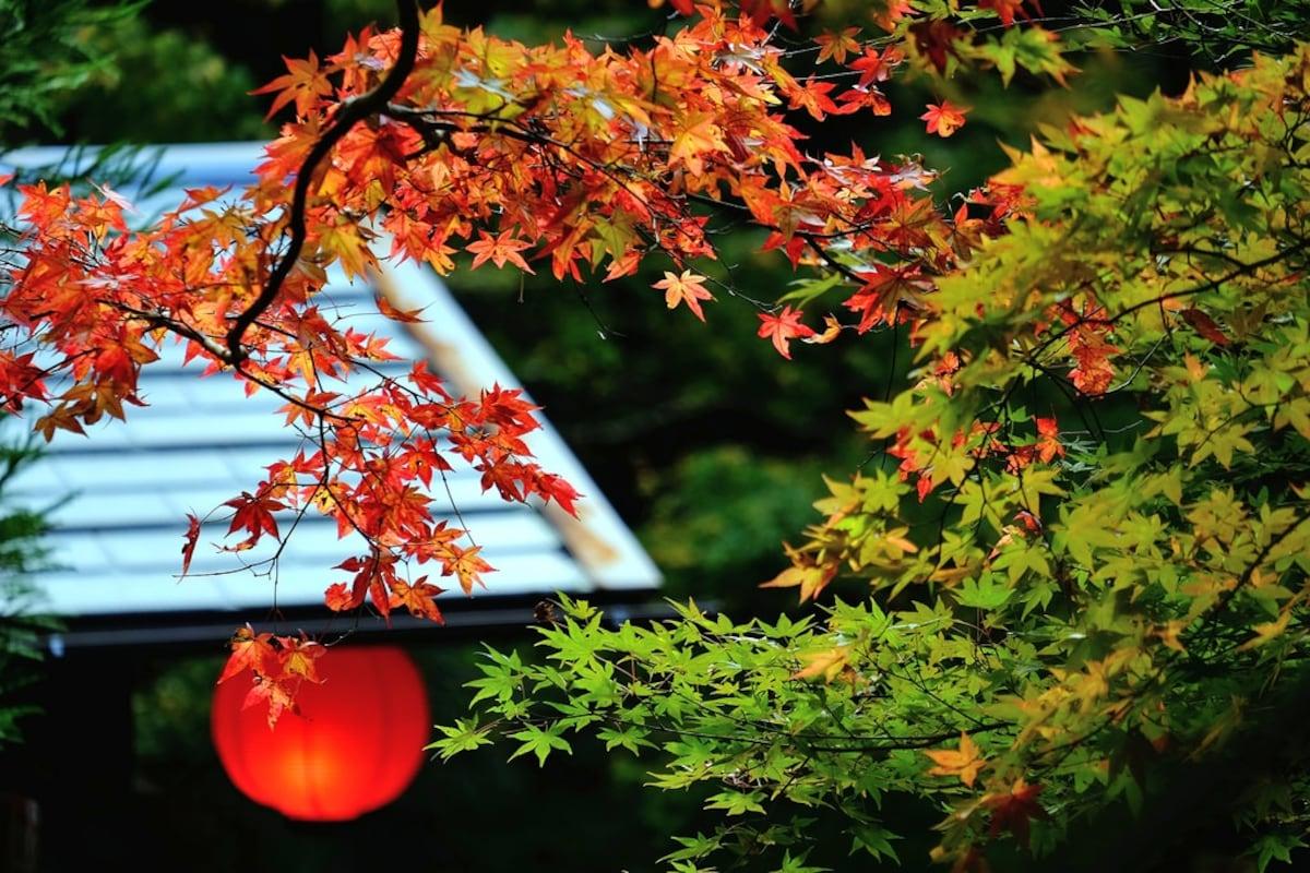 다카오(高雄): 11월 중순~하순