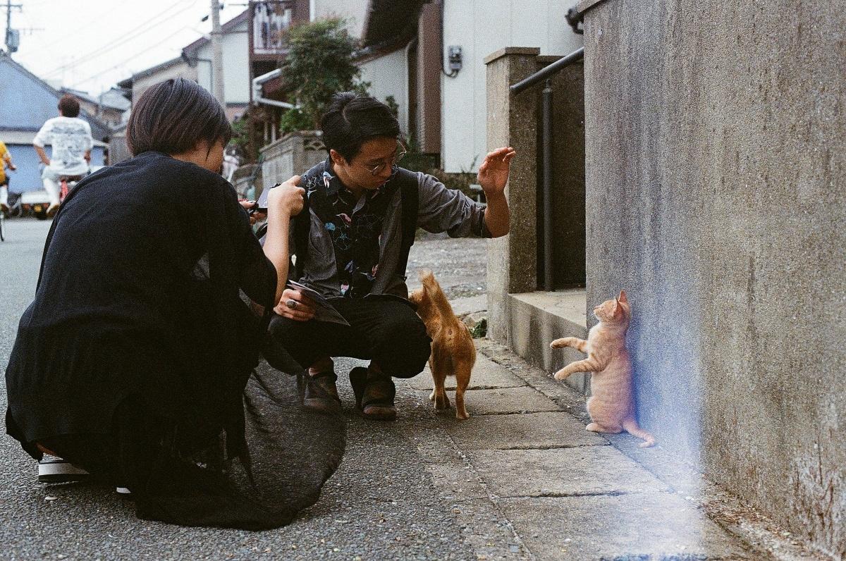 1. เกาะแมว ไอโนะชิม่าจ.ฟุกุโอกะ (Ainoshima, Fukuoka)