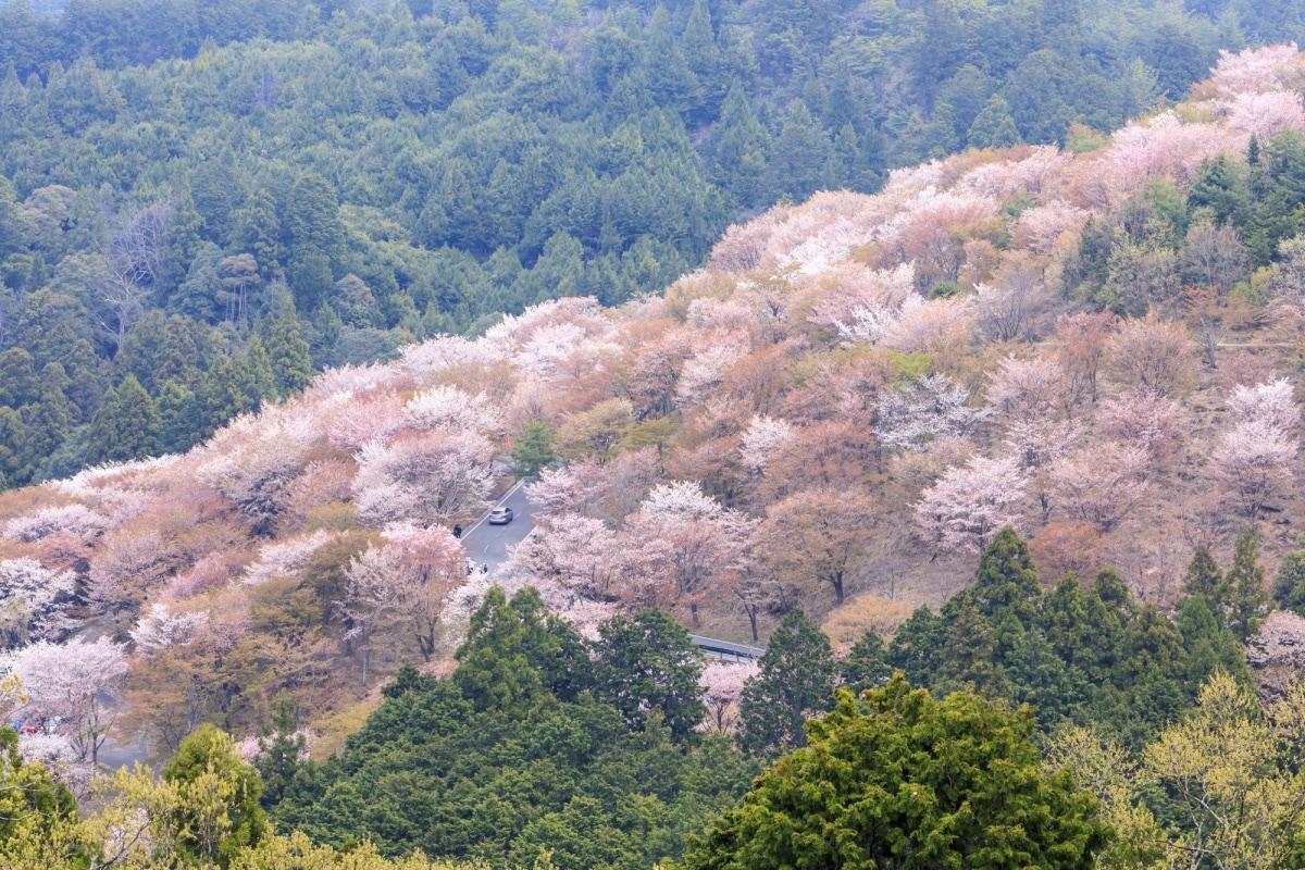 ฤดูใบไม้ผลิ (Spring)  ระหว่างเดือนมีนาคม-พฤษภาคม