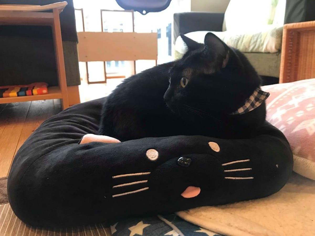 คาเฟ่ญี่ปุ่นที่มีแต่แมวดำ Nekobiyaka