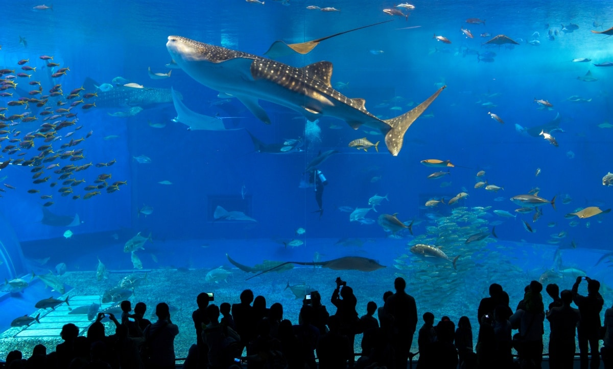 5. Okinawa Churaumi Aquarium