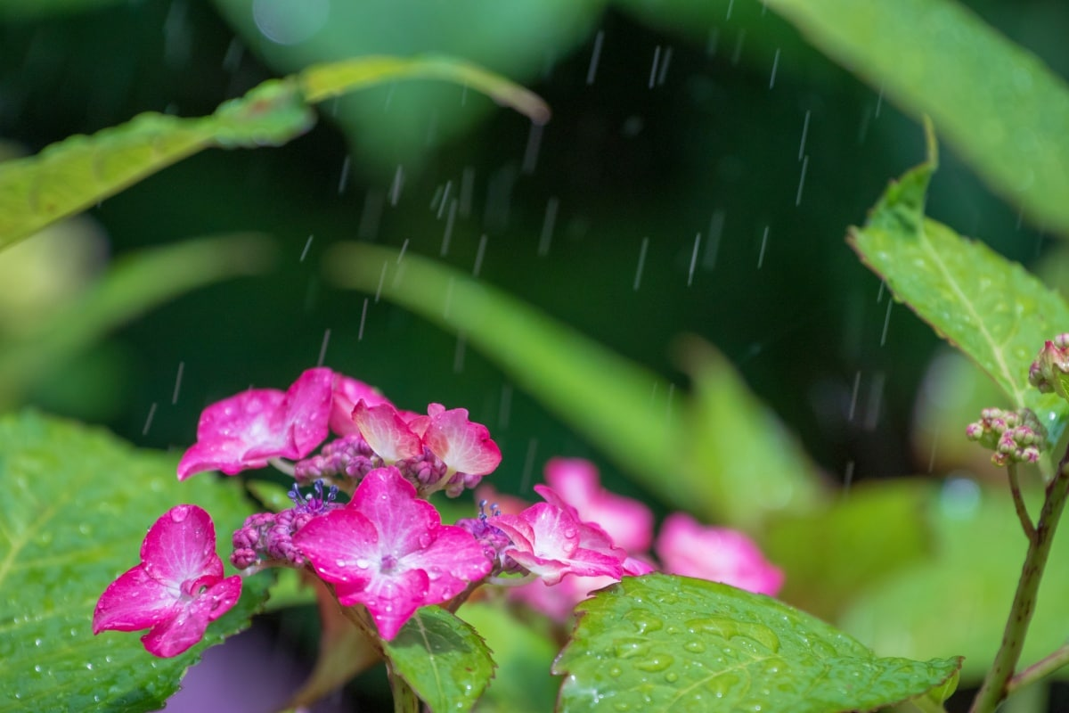 關於日本的梅雨