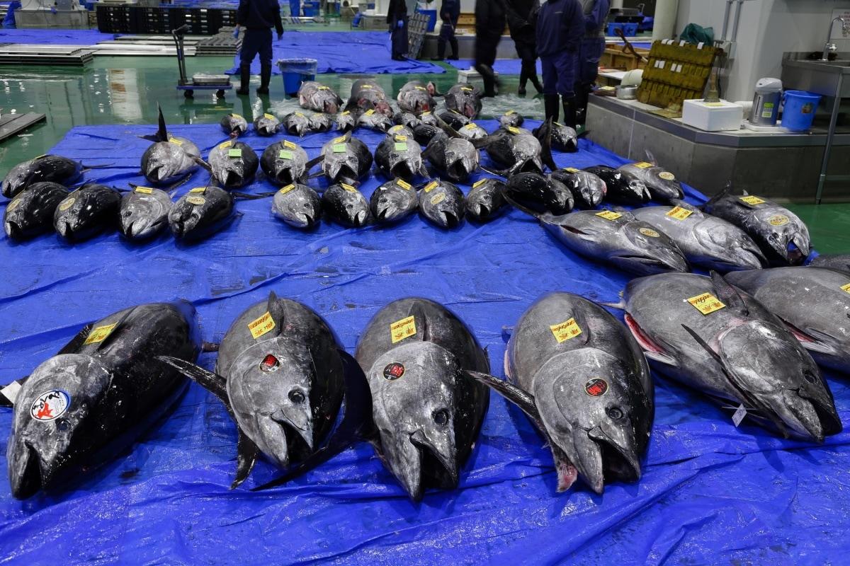6. ตลาดปลาโทโยสุ โตเกียว หรือซึคิจิแห่งใหม่ (Toyosu Fish Market, Tokyo)