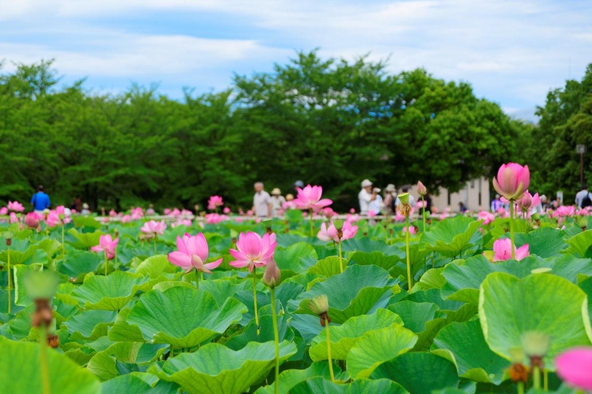 6. Kodaihasu no Sato (Gyoda City)