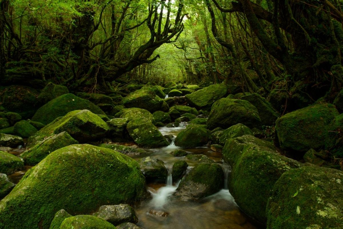 O. 未被指染的原生林:鹿儿岛县