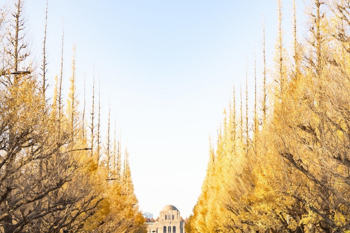 1. สวนเมจิจิงกูไกเอ็น โตเกียว (Meiji-jingu Gaien, Tokyo)