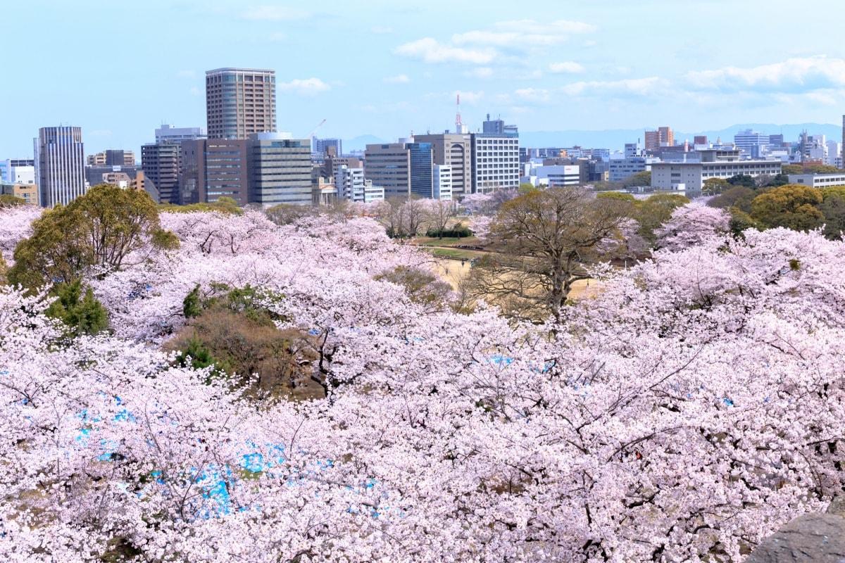 1 สวนไมซุรุ (Maizuru Park)