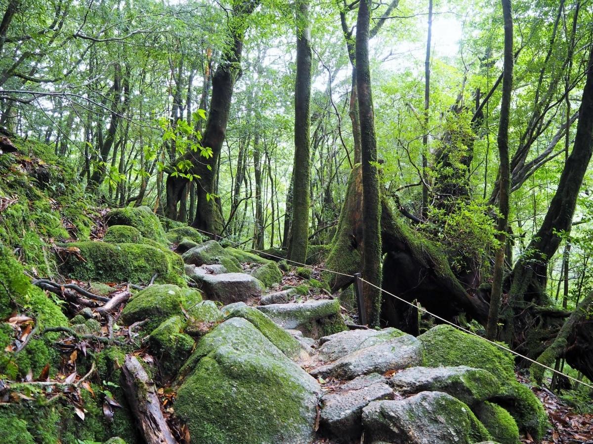 探索屋久島的第一步!白谷雲水峽登山健行體驗