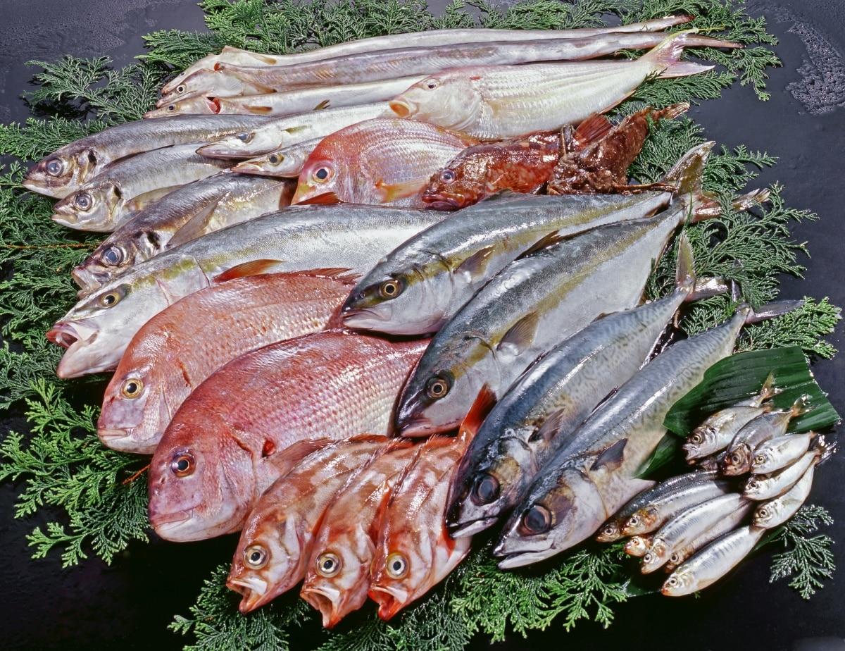 """日本""""鱼""""文化"""
