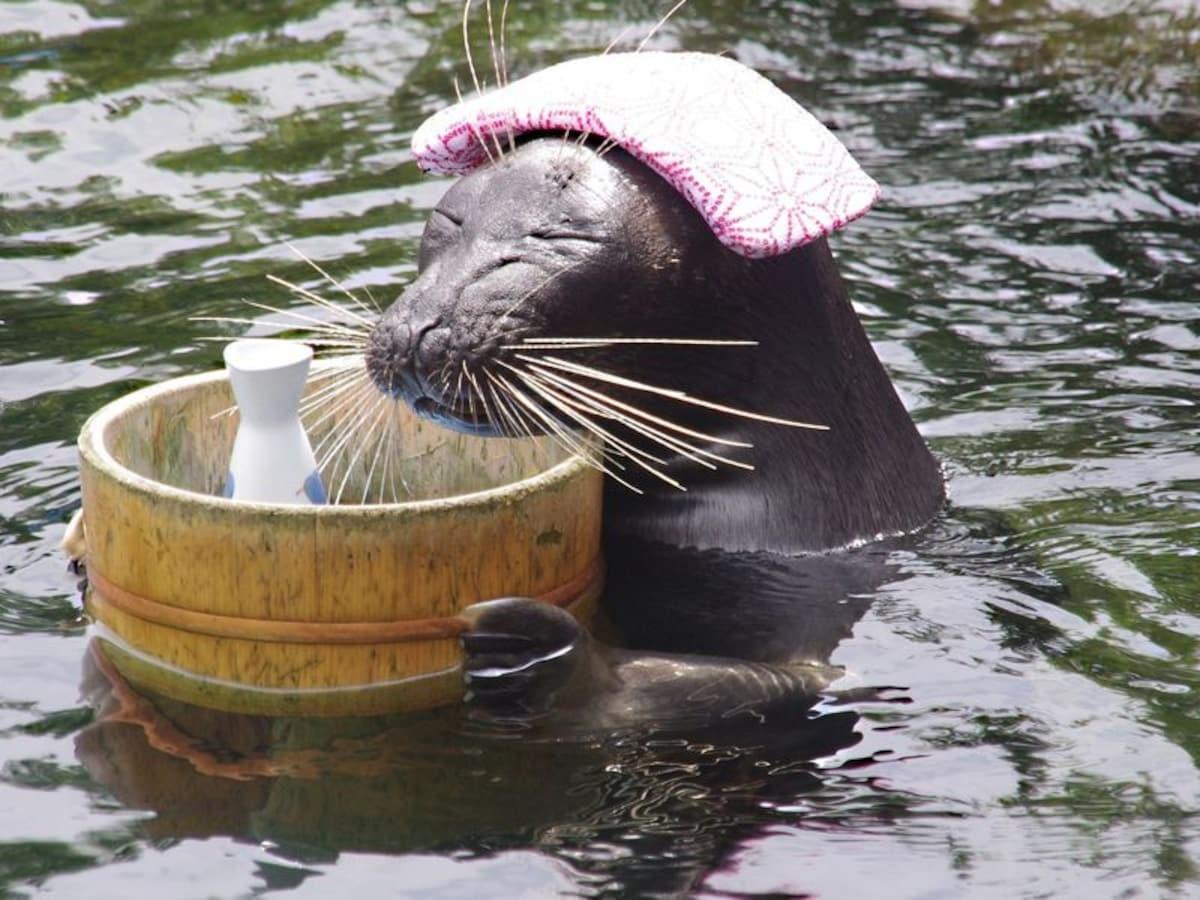 12. Meet Billy the seal at Hakone Aquarium!