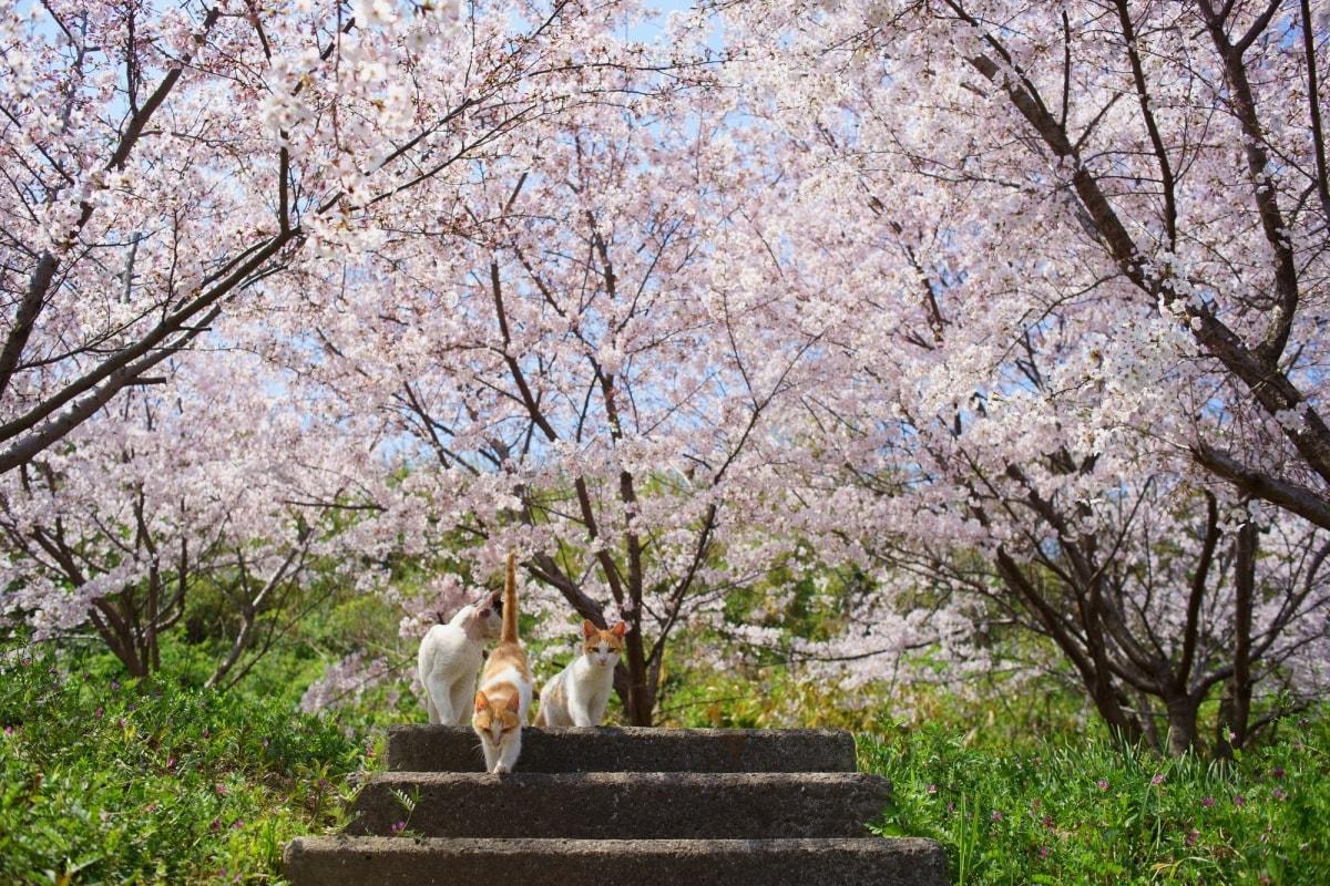 """""""猫之日""""来了,春天要到了"""