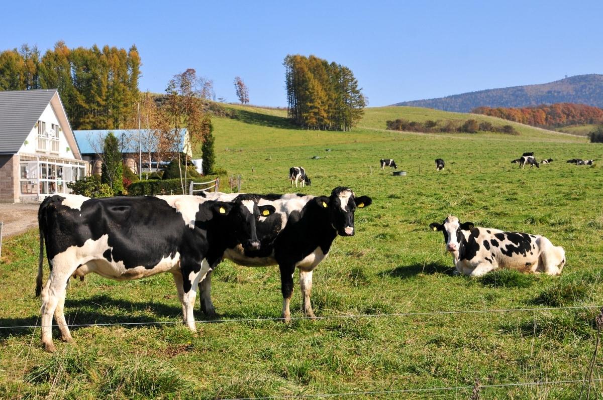 日本牛乳的產銷版圖