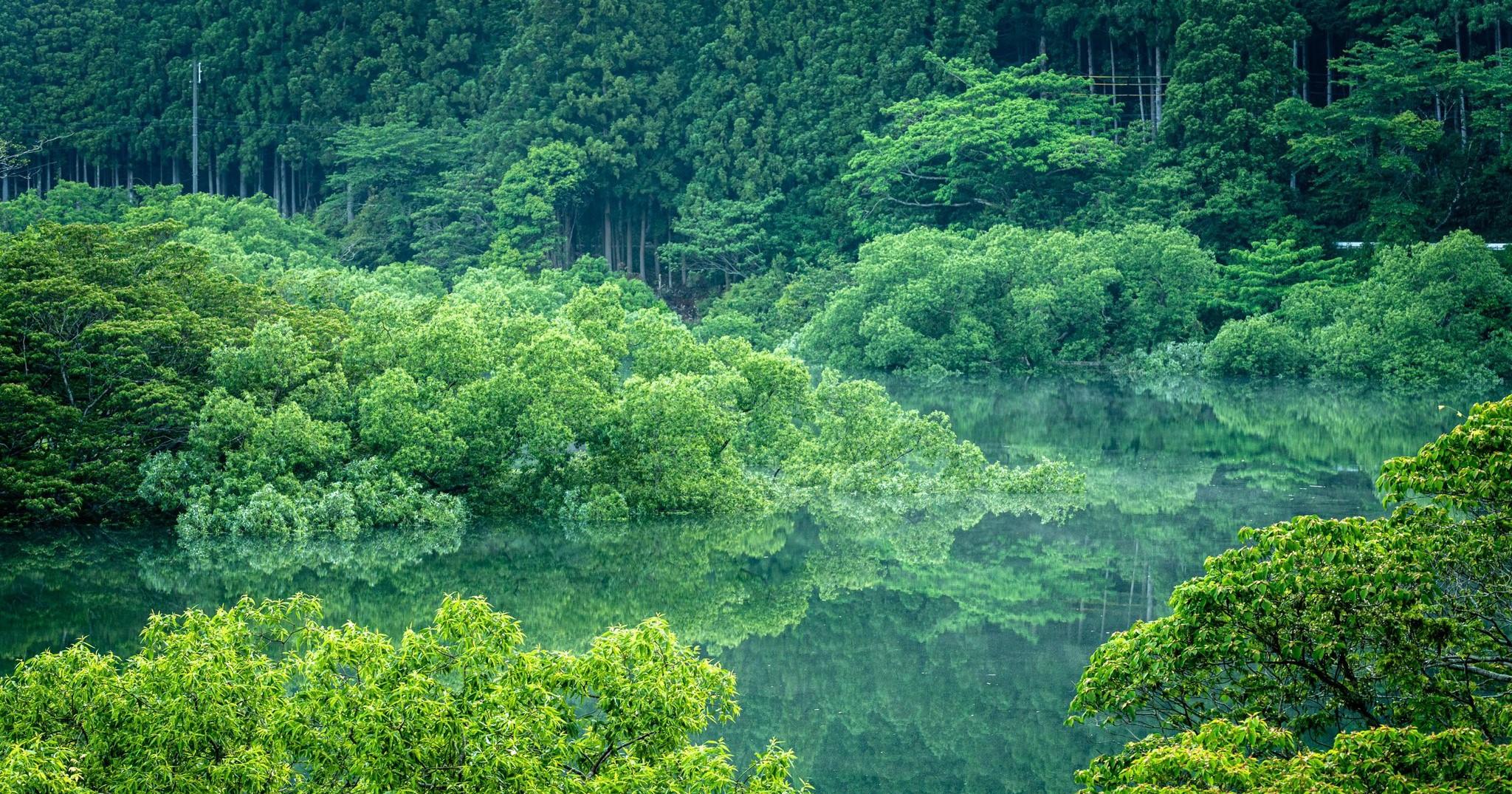 「新緑水鏡が美しい」偶然見つけて撮影された絶景に称賛の声が殺到「美しすぎます」「目がスッキリ‼️」