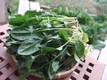 家庭菜園の肥料に