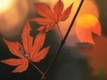 心と身体をケアするアロマ5種