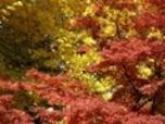 紅葉を撮影するコツ