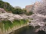 東中野~高田馬場~江戸川橋までの「神田川」(新宿区)
