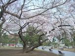 桜の本数は少ないけれど、静かに鑑賞できる「皇居外苑」