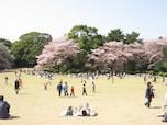 4月中旬から下旬がベストシーズンの「新宿御苑」