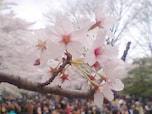 アクセスも便利で、敷地も広大な「代々木公園」(渋谷区)