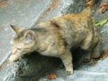 猫の細道(広島・尾道)