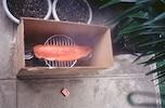 簡単にできるスモーク料理のレシピ