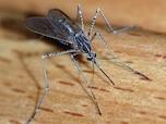 乳幼児は体温が高く、蚊に狙われやすい
