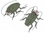 ゴキブリ喘息の恐怖