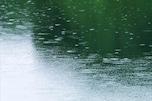 梅雨の体調不良に! 必ずしたいダニ対策