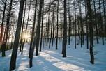 夏季うつもあるけど、冬季うつの方が圧倒的に多い