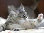 猫のシャンプーは6月中に!