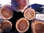 杉の木を使って家を建てる