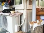着いたのは猫の駅(千葉・養老渓谷)