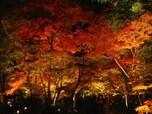 【秋】紅葉の名所巡り