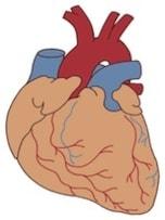 心電図から分かること