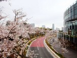 ★東京ミッドタウンの見どころはこちら!