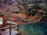 静岡・夢の吊り橋
