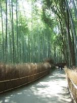 竹林の道/京都・嵯峨野