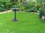 芝生の種類