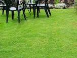 1年中緑の芝生を楽しむには