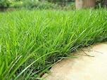 芝生の管理法
