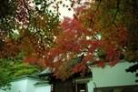 京の紅葉は、東福寺をおいて語れない
