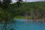 美瑛の青い池/北海道・美瑛
