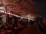 東京スカイツリーの夜景スポットでお花見「隅田公園」(墨田区)