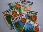100円ショップの野菜の種を買って野菜を育てる