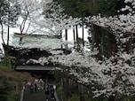 円覚寺 風情あるお寺で楽しむ桜