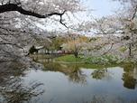 春の鎌倉の見どころはもちろんあれです