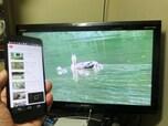 「Chromecast」でスマホをTVの迫力ある画面で楽しもう