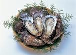 生食用と加熱用の違いは、保健所が指定した海域で獲ったか否か